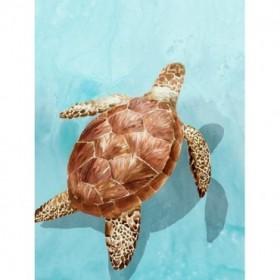 Ocean Deep Turtle I