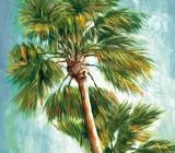Palm Trees canvas prints