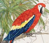 Tropical Animals canvas prints